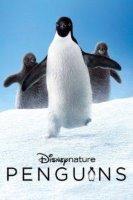 penguins 21312 poster